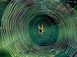 orb-weaver-spider-web